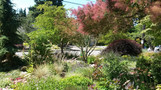 Hawthorne Hills front yard