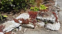 recycled concrete raingarden edge