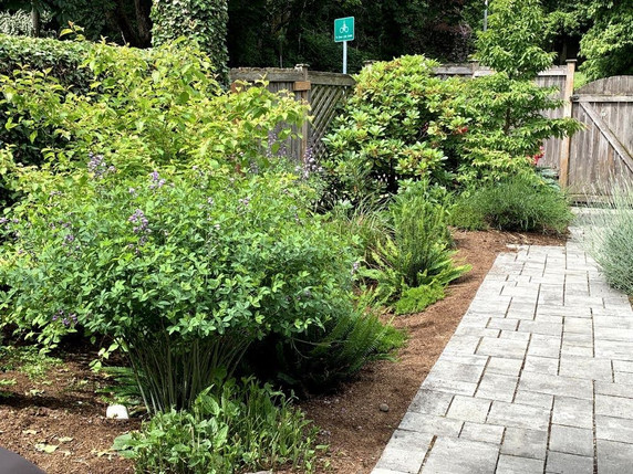 paver walk and rain garden