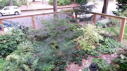 front fenced raingarden