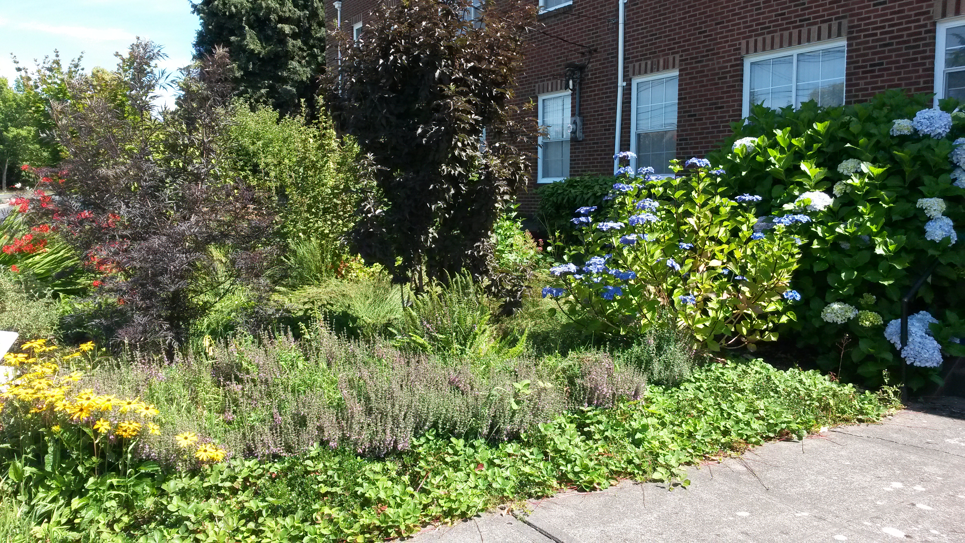 church raingarden 2