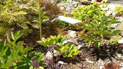 recycled concrete raingarden