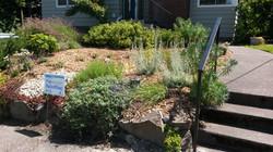 front yard raingarden