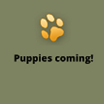Puppies coming (1).png