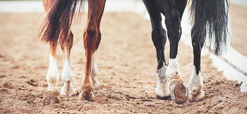 legs-of-show-horses.jpg
