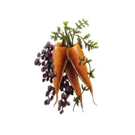 harvest_mirepox.jpg