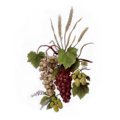 harvest_wineill.jpg