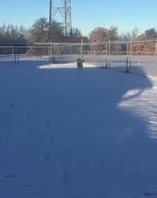Snowday playday