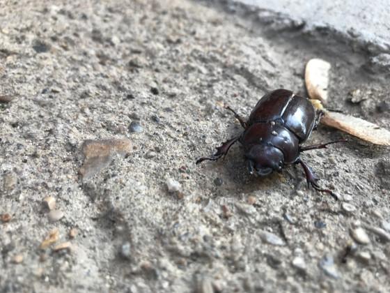 Beetle. Not Juice but Juicy.