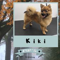 Kiki the beautiful Pomeranian