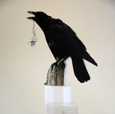 Basho's Crow: The More I Hear