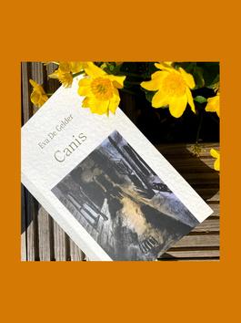 Chrysanten in oktober (romanfragment uit canis)