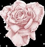 rose copy 3.png