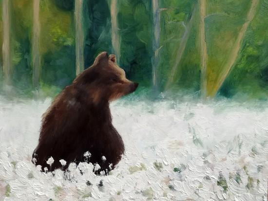 Bear / Karhu