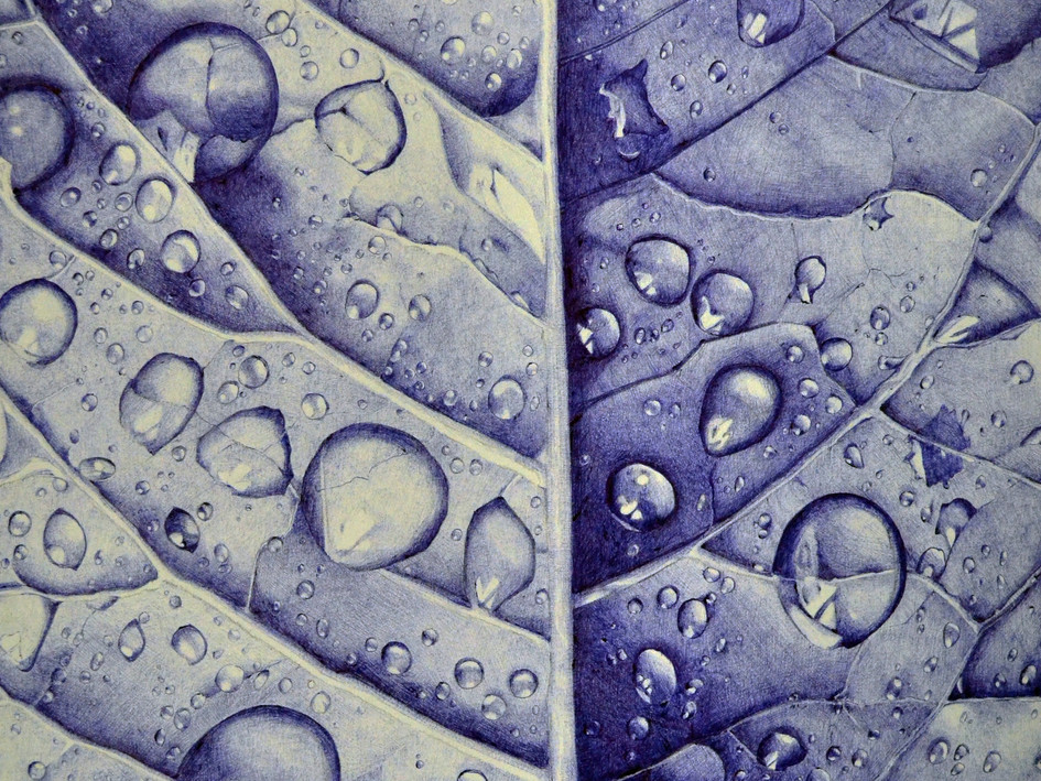 Dew drops / Kaste