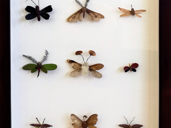 Collection II