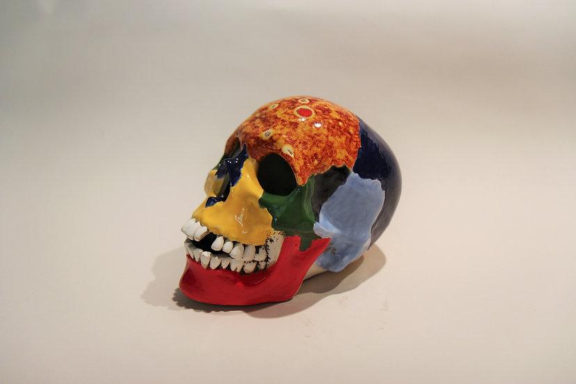 The Anatomic Skull