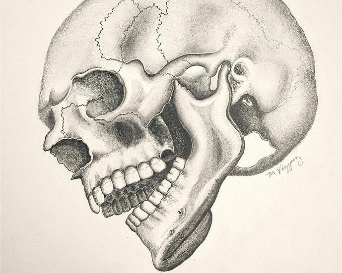 The Cranium I