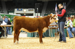 MN Beef Expo 2010 October 23 003