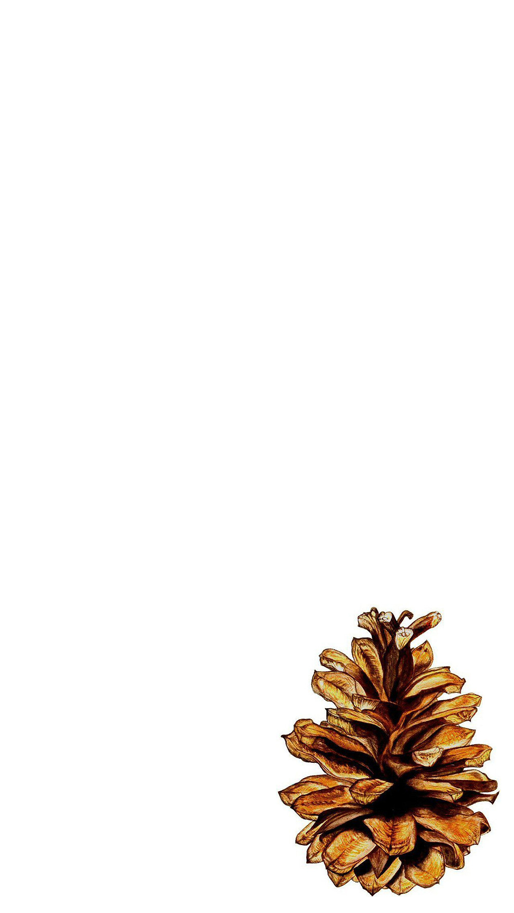2017 Fall Autumn Phone Backgrounds - Fall Phone Wallpapers - pine cone watercolor background