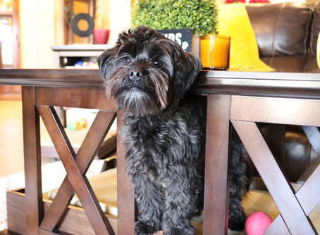 Stylish Pet Furniture For Your Home