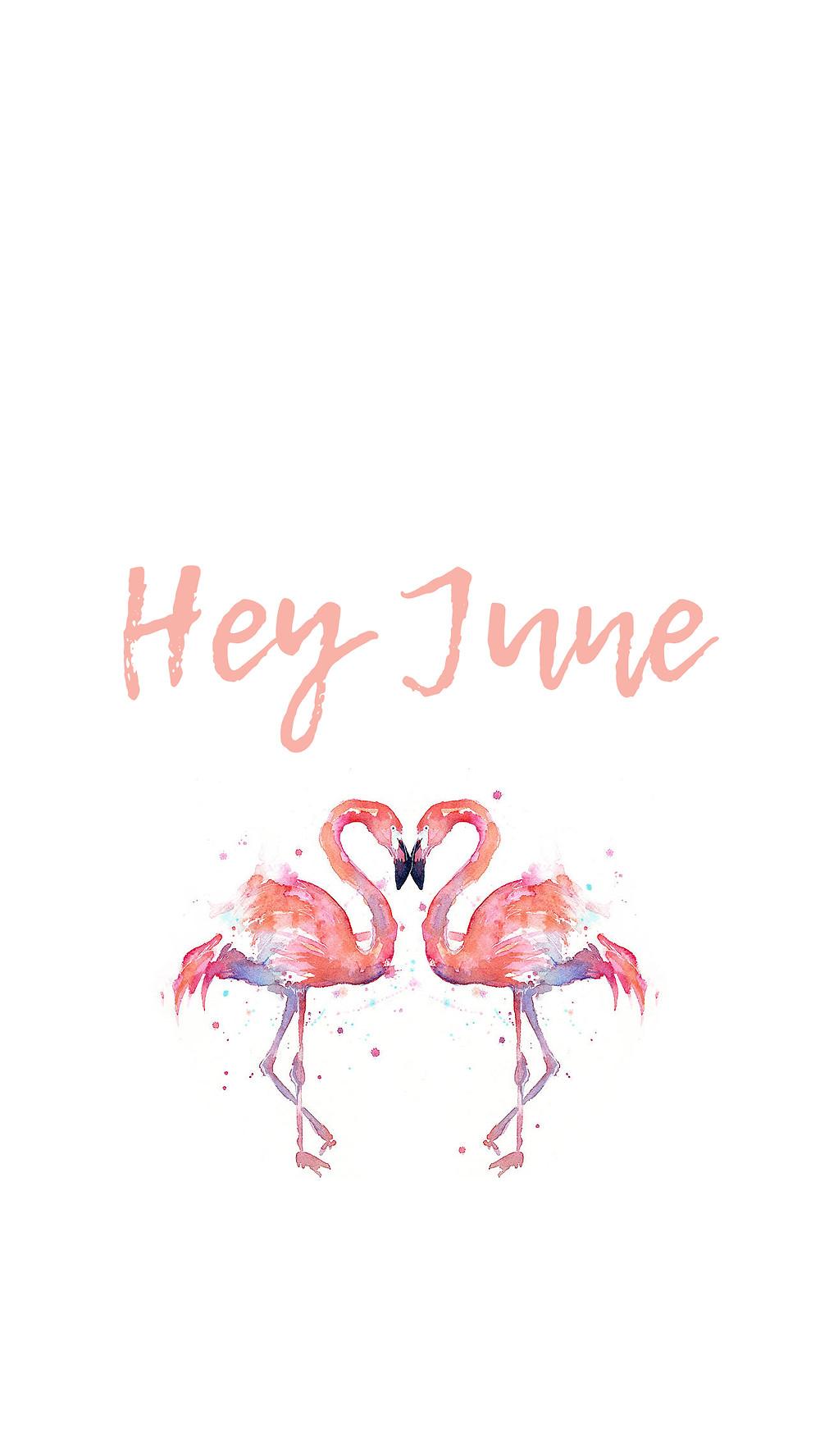 June 2017 Flamingo tech phone and desktop background wallpaper free download