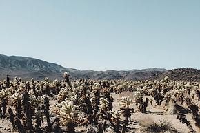 Cactus Field