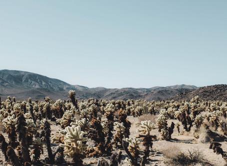 Arizona Heat and God's Promise