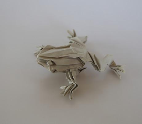 Tree Frog by Satoshi Kamiya