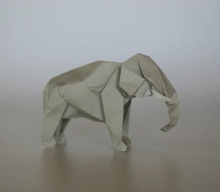 Asiatic Elephant by Satoshi Kamiya