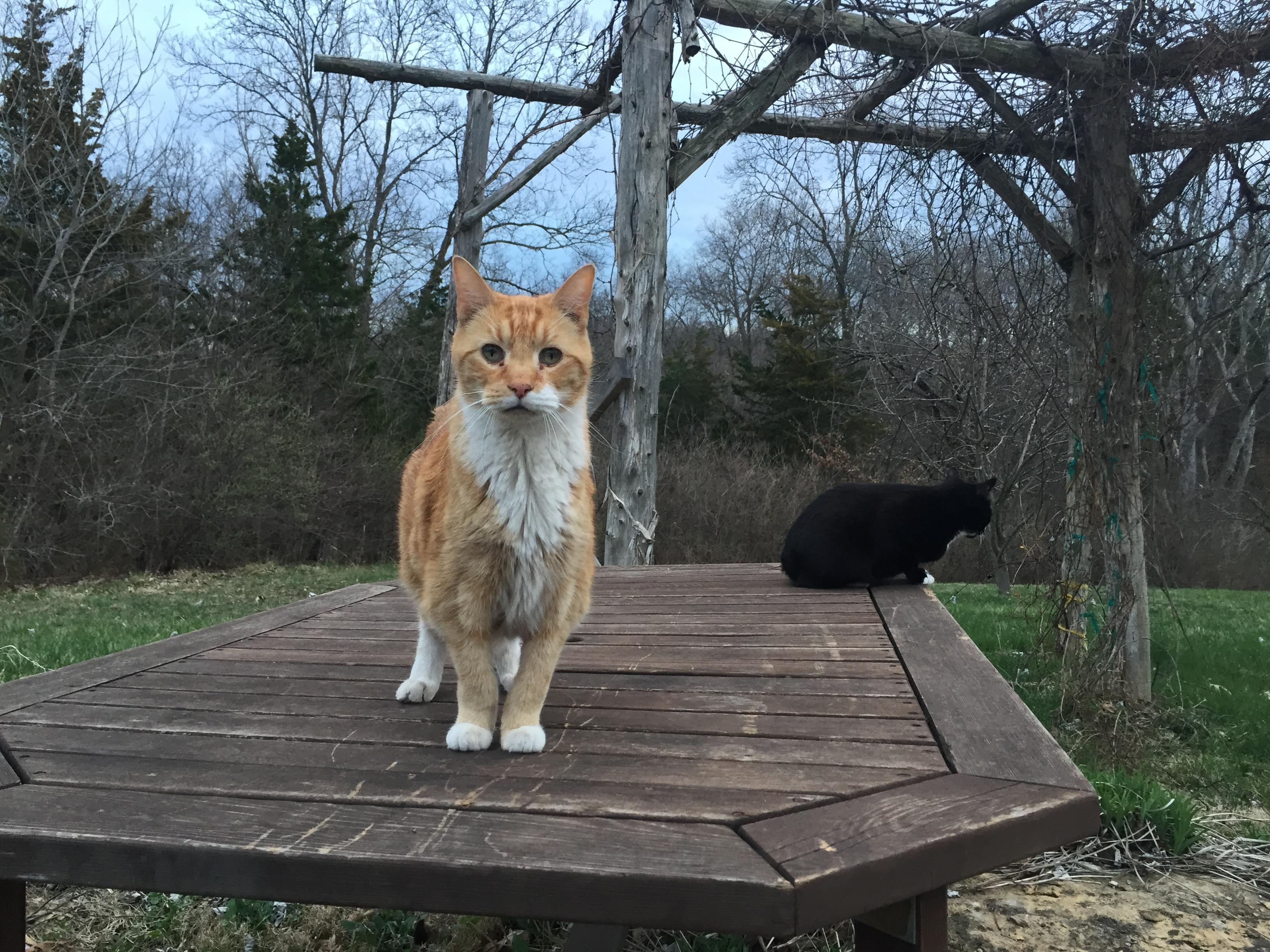 the felines!