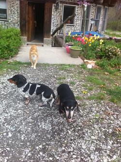 Animal greeters