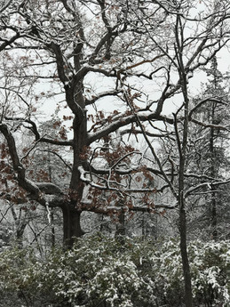 The second snow this season