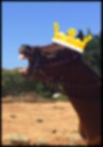 California Therapy Horses Stallion Memberhsip