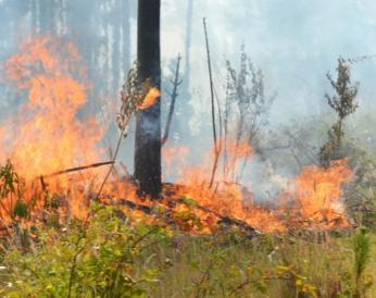 Alerta Amarilla para la Región de Los Ríos por simultaneidad de incendios forestales