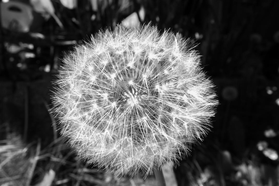 Natur02_20160522 (2 von 14)