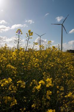 Molzmühle_Windkraftanlage_w-8