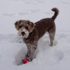 coco snow.jpg