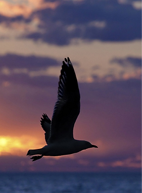 seagull-1626449_1280_edited.png