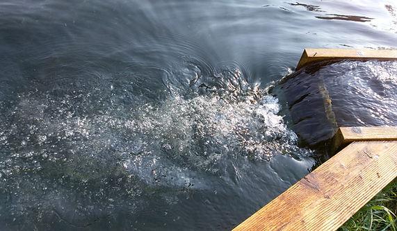 Wasser einlauf