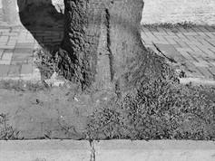 O plano diretor de arborização urbana e o Desenvolvimento Sustentável