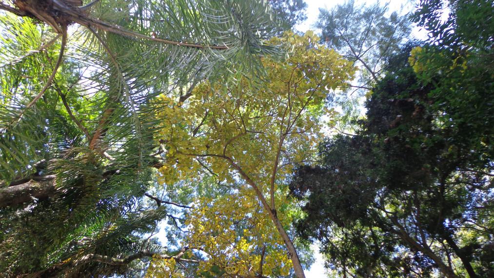 vegetação densa
