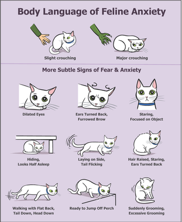 BODY LANGUAGE OF A STRESSED CAT!