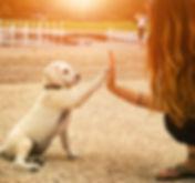 All About The Pet Nannies Ltd Pet Sitting, Dog Walking & Pet Transport