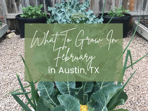 What to Grow in February in Austin, TX