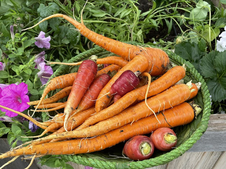 What to Plant in September for a Fall Harvest