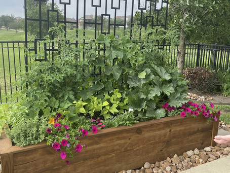 Tips for Keeping Your Plants Cool Over Austin's Summer Months