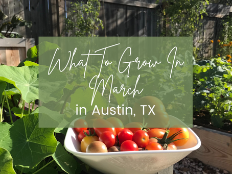 What to Grow in March in Austin, TX