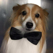 Bowties to make your dog feel its best!