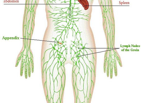 Lymphatic System-Staying Healthy